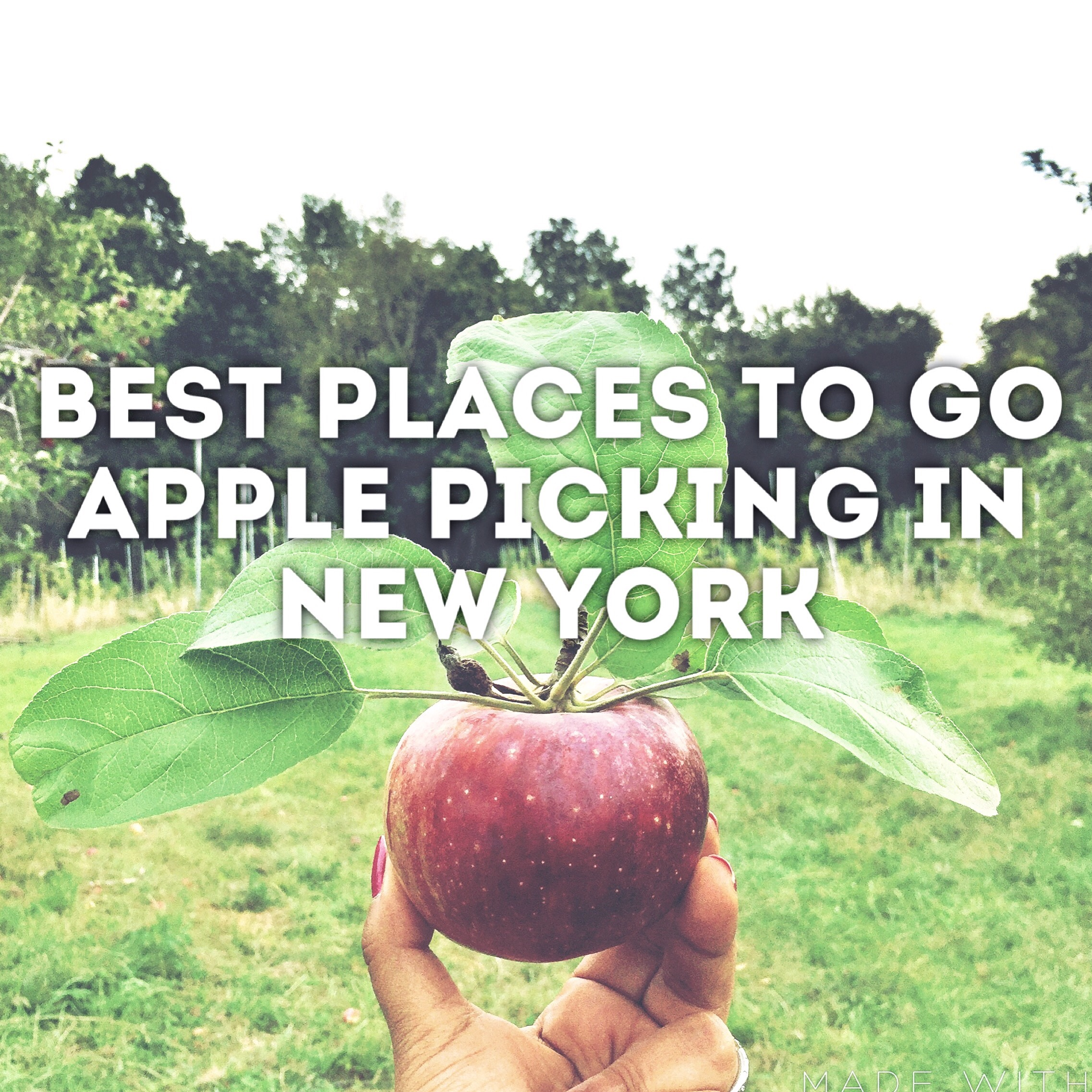 Best Places For Apple Picking Near New York City The New York Mom